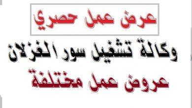 Photo of عرض عمل وكالة تشغيل سور الغزلان البويرة